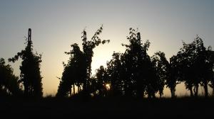 Veduta collinare - alba
